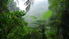 Forest. Tropical forest in the Philippines stock photo