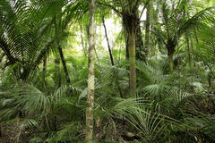 Forest in the tropics Stock Photography