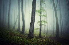 Forest trough trees in a mysterious eerie spooky gloomy forest Stock Photo