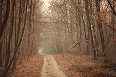 Forest tunel Royalty Free Stock Photos