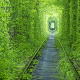 Forest tunnel and rail way in spring time. In Ukraine Royalty Free Stock Photo