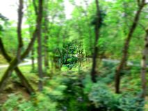 Forest Tunnel Vision Stockfoto