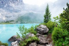 Forest and turquoise lake in the Dolomites apls, Italy. Sorapis lake in the Italy. Beautiful landscape at the summer time stock image