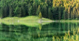Forest and turquoise lake in the Switzerland. Forest and reflection on water surface. Beautiful landscape at the summer time royalty free stock photos