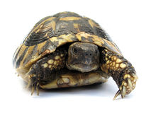 Forest turtle Stock Images