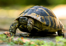 Forest turtle Royalty Free Stock Image