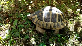 A forest turtle stock footage