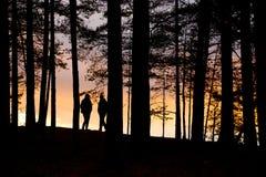 Forest Twilight Background royalty-vrije stock foto's