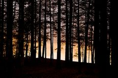 Forest Twilight Background stock foto's