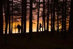 Forest Twilight Background stock fotografie