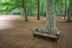 Forest Umbra (Gargano) Royalty Free Stock Image