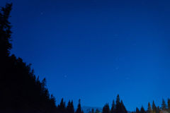 Forest under blue dark night sky Royalty Free Stock Photography