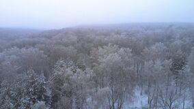 Forest under heavy snowfall