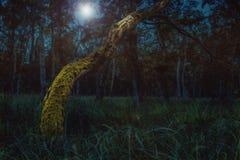 Forest Under The Moonlight encantado fotos de stock