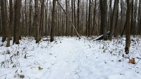 Forest under snow. First snow in the forest stock video footage