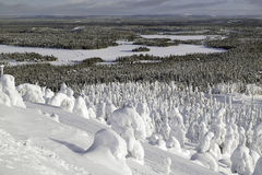 Forest under the snow. Lowland landscape view Royalty Free Stock Photo