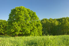 Forest under sunlight Royalty Free Stock Photography