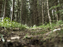 Forest undergrowth Royalty Free Stock Images