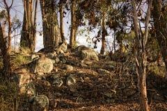 Forest Undergrowth bei Sonnenuntergang Lizenzfreie Stockbilder