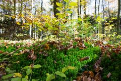 Forest Undergrowth e folhas caídas em Sunny Autumn Day imagens de stock