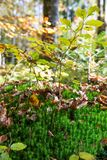 Forest Undergrowth e folhas caídas em Sunny Autumn Day fotografia de stock royalty free