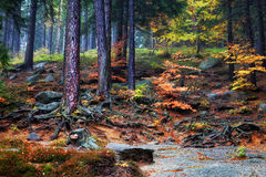 Forest Undergrowth on Mountain Slope Stock Photography