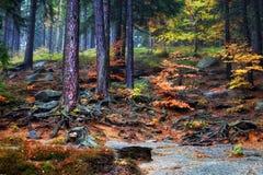 Forest Undergrowth na inclinação de montanha fotografia de stock