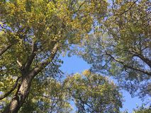 Forest, up view on trees. Early autumn forest. Nature, up view on trees. Vladivostok city Royalty Free Stock Image