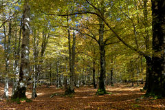 Forest in Urbasa, Navarra Royalty Free Stock Photo