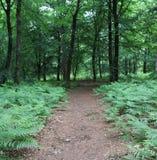 Forest Utrecht-heuvelrug lizenzfreie stockbilder