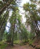 Forest In Värmland Fotografía de archivo