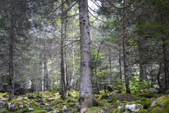 Forest in Val di Mello, Alps mountains, Italy Stock Photography