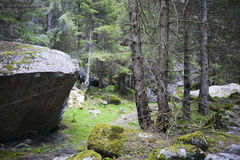 Forest in Val di Mello, Alps mountains, Italy Royalty Free Stock Photography