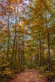Forest in Valia Calda royalty free stock image