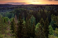 Forest valley. Before sunrise in magical light in Nuuksio nature park, Finland Stock Photos