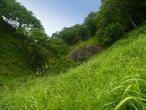 Forest valley. Fine forest valley landscape with grass meadow against blue sky Royalty Free Stock Photos
