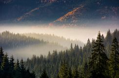 Forest in valley at foggy sunrise Royalty Free Stock Image