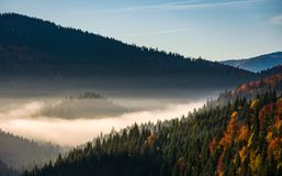 Forest in valley at foggy sunrise Stock Image