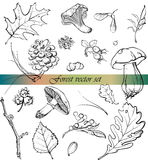 Forest vector set Royalty Free Stock Photo