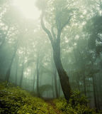 Forest vegetation around a huge old tree. Fog in a forest with forest vegetation around a huge old tree Stock Photos