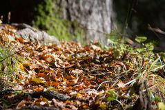 Forest vegetation Stock Photos