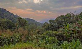 Forest and Vegetation in Mae Wong National Park Royalty Free Stock Photo