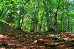 Forest vegetation - trees Stock Photos