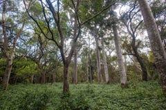 Forest Vegetation tropical Imágenes de archivo libres de regalías
