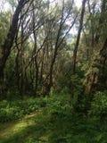 Forest Very agradable Foto de archivo libre de regalías