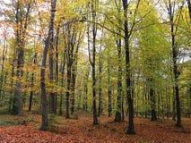 Forest View Imágenes de archivo libres de regalías