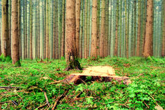 Forest view Royalty Free Stock Photography