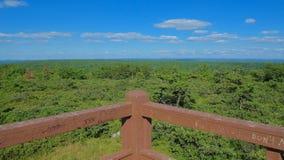 Forest View Imagen de archivo libre de regalías