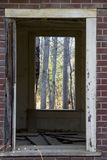 Forest View. Hardwood forest through the window of an abandoned house Royalty Free Stock Images