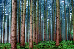 Forest view Royalty Free Stock Image